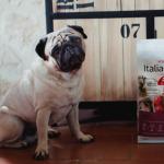 Italian Way: una giornata dedicata ai nostri amici a quattro zampe